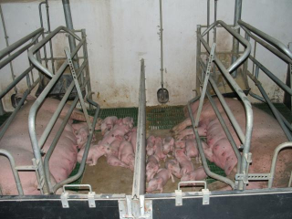 Karakai farm -3