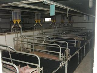 Karakai farm -4