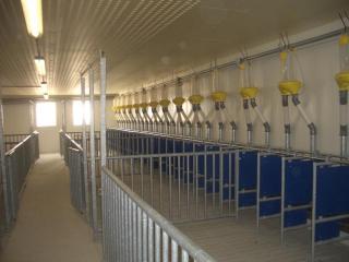 Karakai farm -11